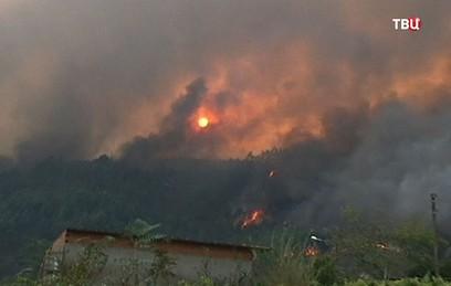 Жертвами лесных пожаров в Португалии стали 36 человек