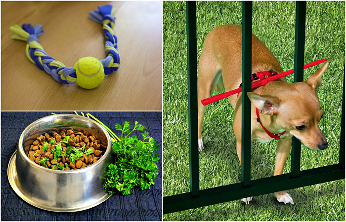 17 гениальных хитростей,для владельцев собак.