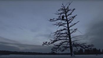Фильм «Царь-птица» получил главный приз 40-го ММКФ