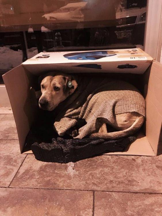 """""""Если вам мешают животные, не заходите в наш магазин!"""" Бутики Стамбула открыли двери для замерзающих собак"""
