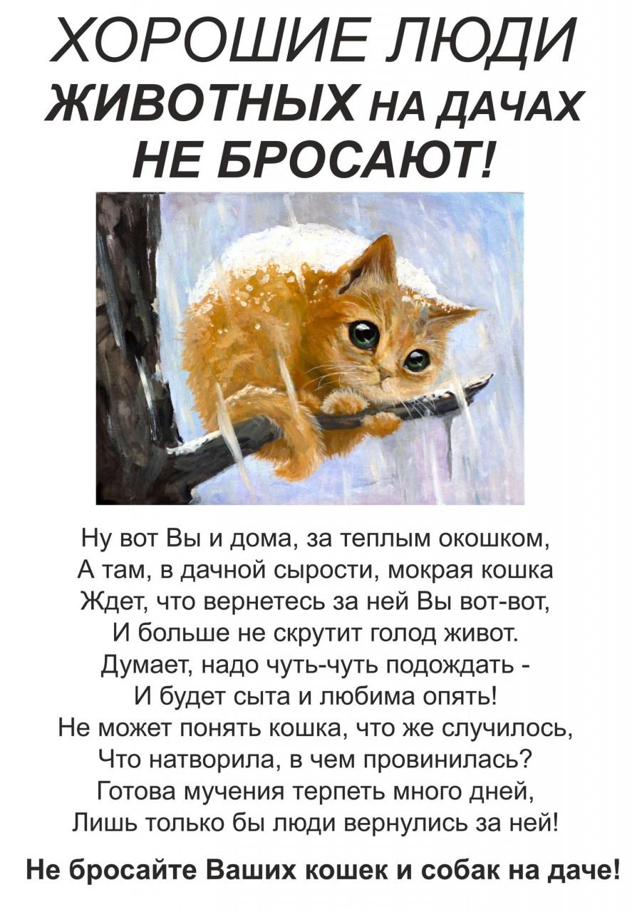 Обращение дачникам: не бросайте животных на верную гибель!