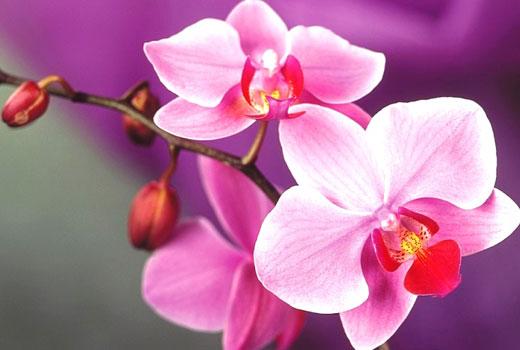 Уход за орхидеями дома