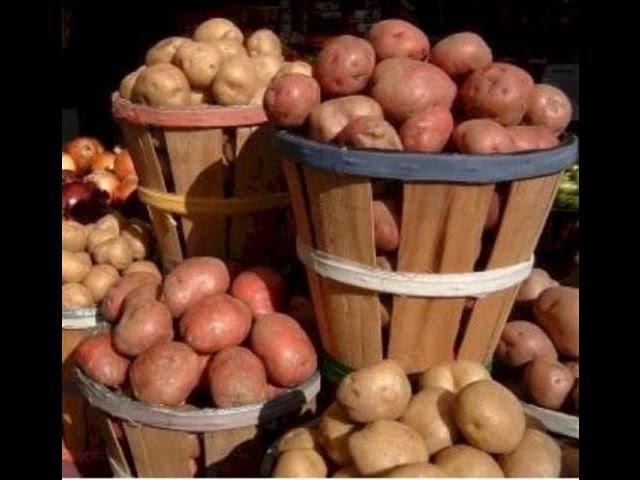 Картофель в рецептах народной медицины (здоровое и лечебное питание)