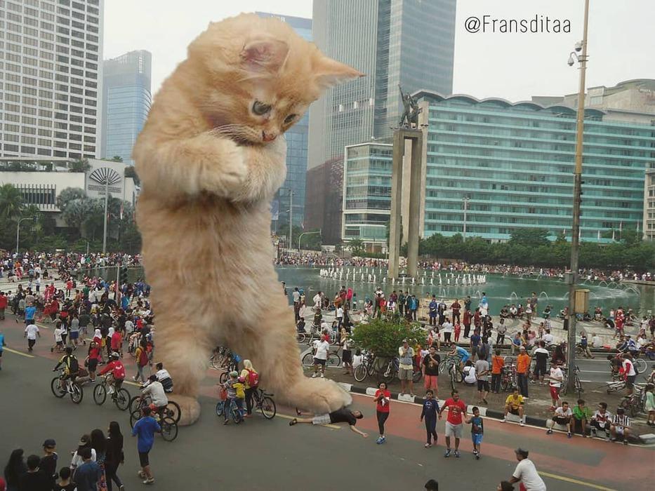 Гигантские коты стали причин…