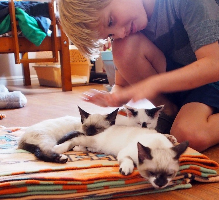 Четыре котенка сделали большую собаку снова счастливой