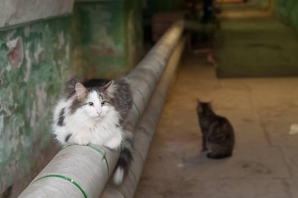 Министерство строительство на защите бездомных котов. А Вы согласны?