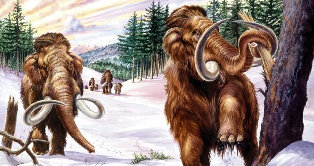Ученые надеются создать гибрид мамонта и слона к 2020 году