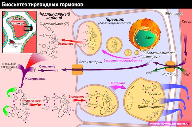 Что такое гипотиреоз и как его лечить
