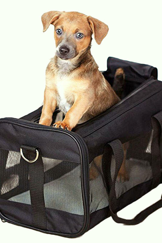 Собака в сумке для перевозки. Фото с фотостока.