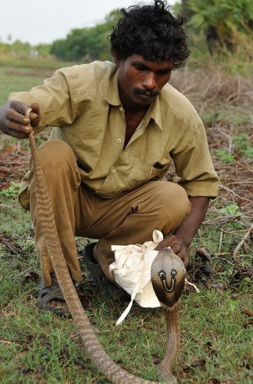 Охотники на змей из племени ирула