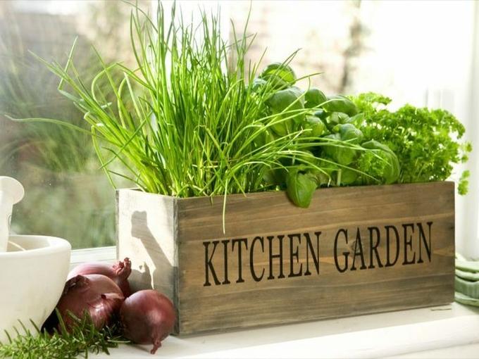 Огород на подоконнике: выращиваем зелень дома (видео) - Smak.ua