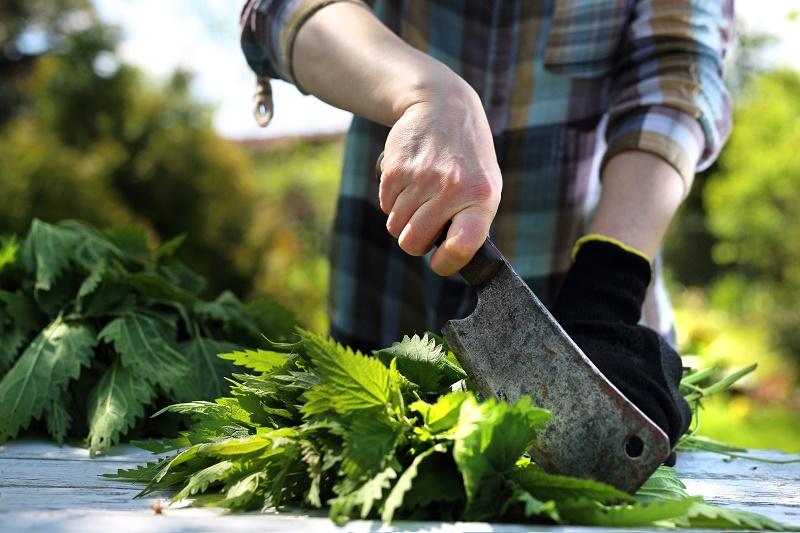 удобрение из травы и сорняков