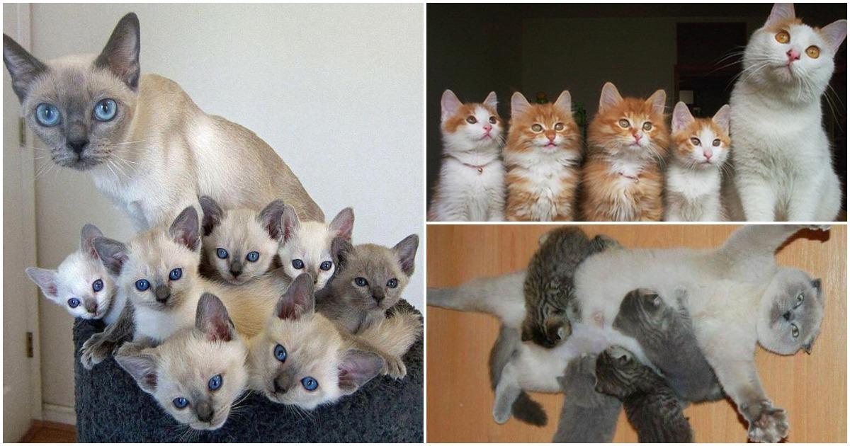 Кошки с пополнением —  идилл…