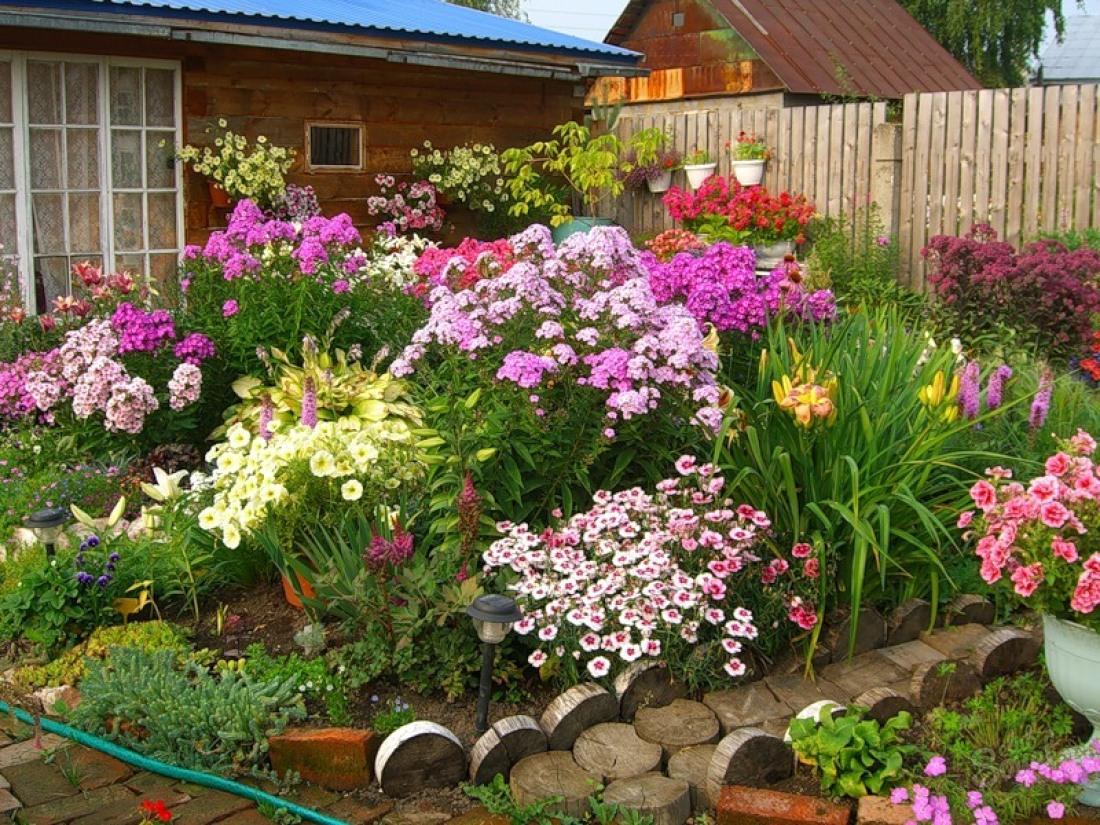 как красиво посадить лилии на даче фото