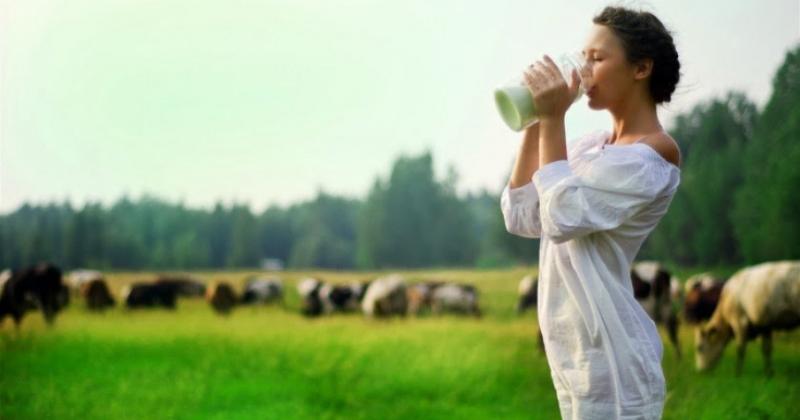 Сколько можно пить молока без вреда для здоровья