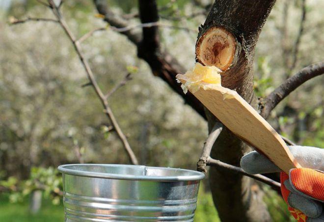 чем замазать спилы на яблоне после обрезки