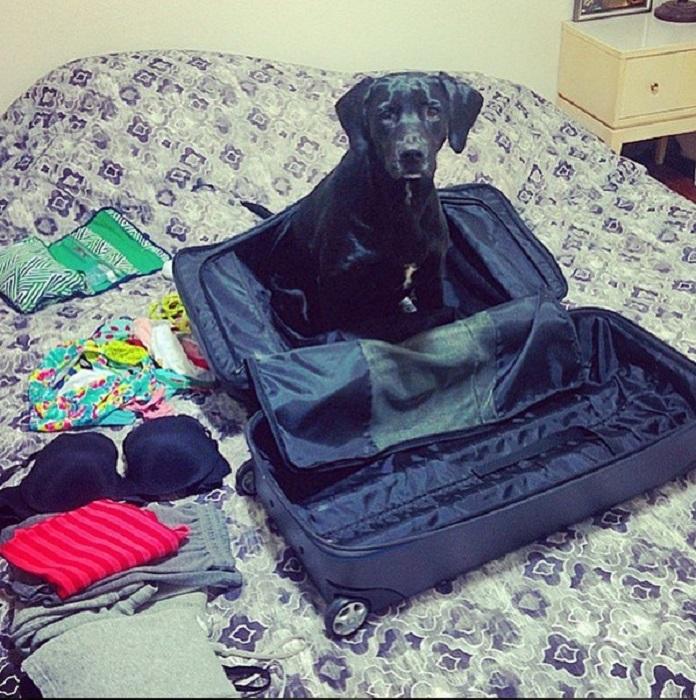 Зачем тебе вещи? Возьми меня с собой.