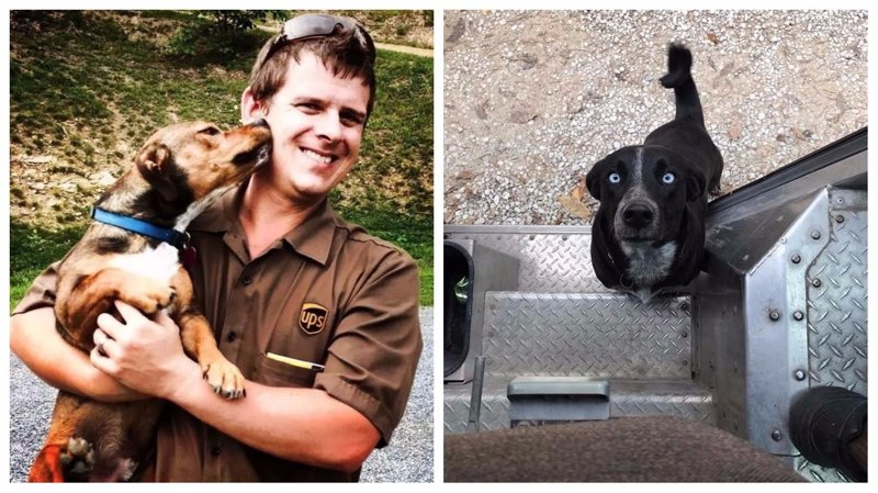 Лучшая группа в Фейсбуке: собаки встречают почтальонов службы доставки