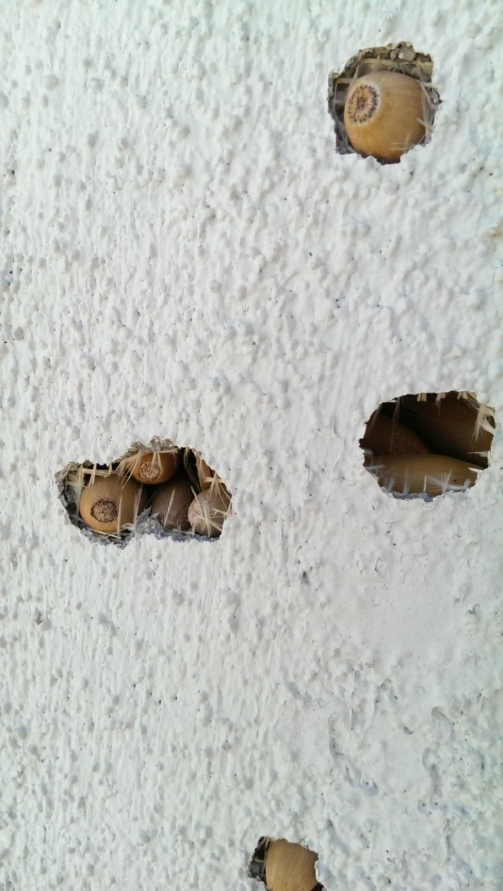Мужчина с утра вышел во двор и не узнал свой дом, он был весь в дырах