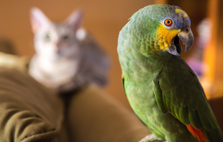 Про котов,  орлов и попугаев