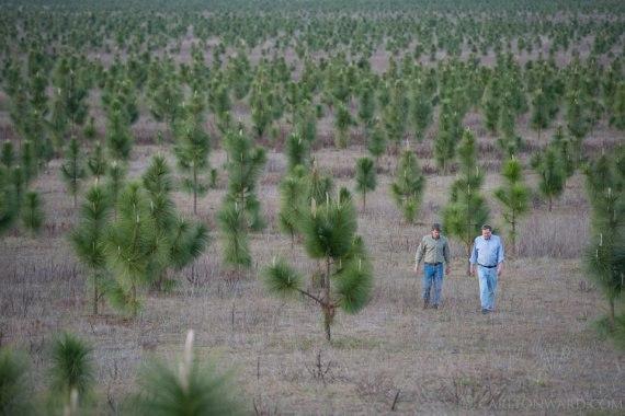 Человек высадил 8 млн деревьев