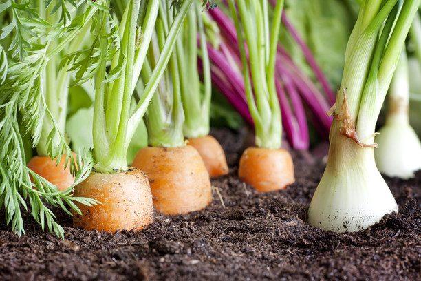 Народные приметы для садоводов
