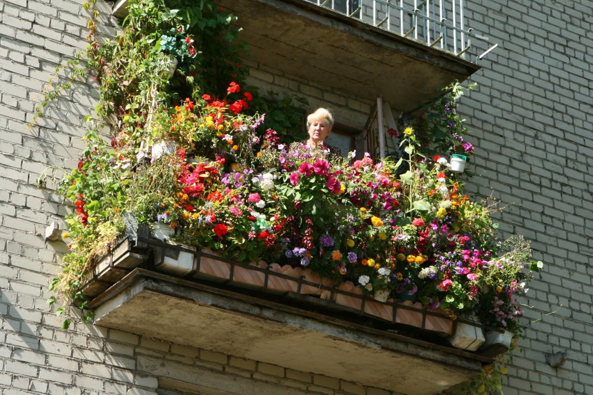 Красные цветы на балконе