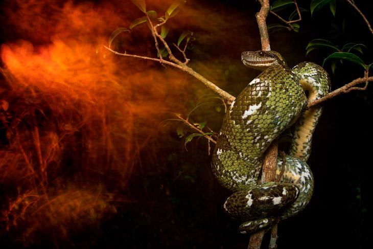 Лучшие фотографии природы от Британского экологического общества
