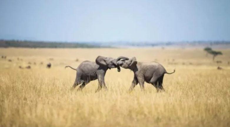 «Ноев ковчег»: во имя сохранения видов