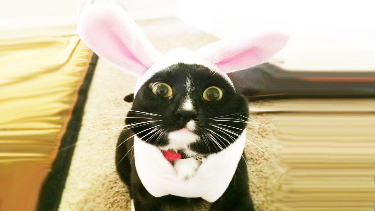 Смешные коты и кошки)