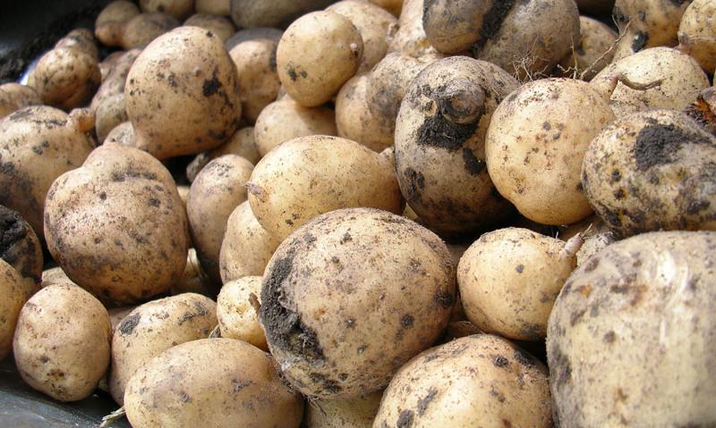 Про картофель