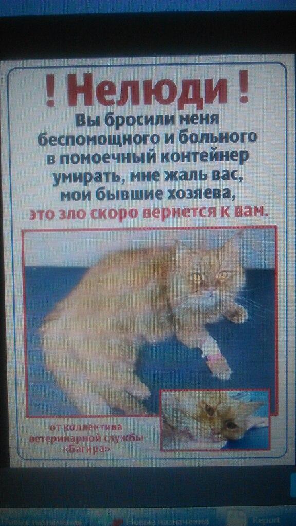 Клиенты ветеринарки выкинули кота на помойку