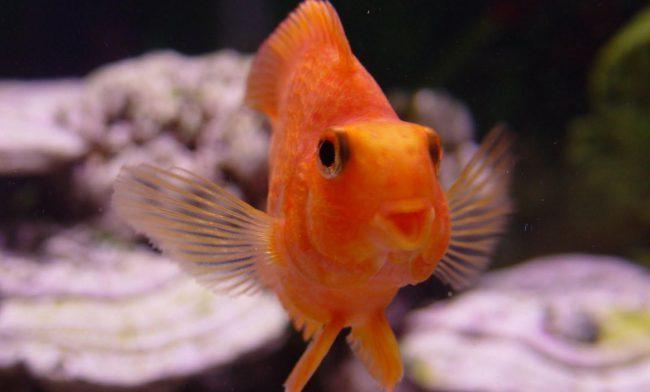 Ледяной запой: алкоголь помогает зимовать даже рыбкам