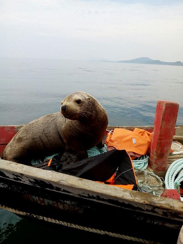 Три рыбака и обнаглевший морской котик — как стали выгонять, так он еще и рычать вздумал!