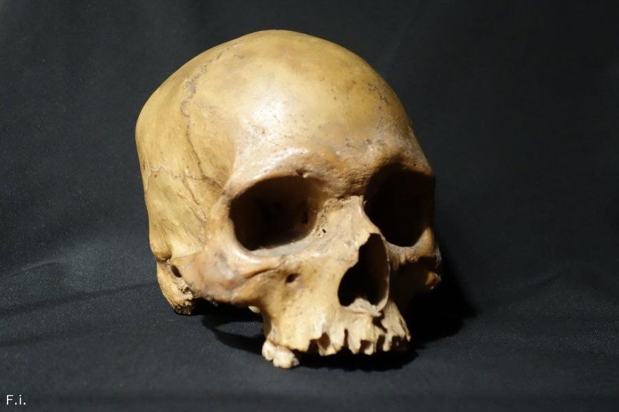 История черепа, найденного в британском пабе.