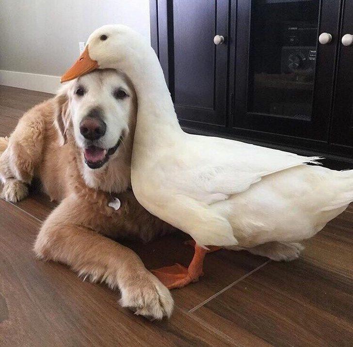 Жизнь с животными — всегда веселуха