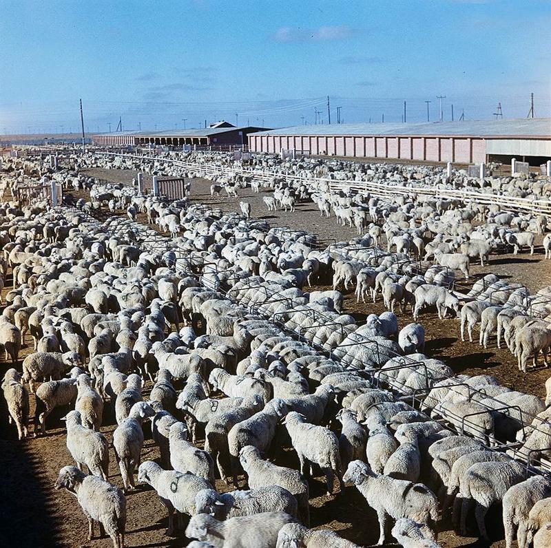 Освоение целины на цветных фото из архива журнала «Огонек»