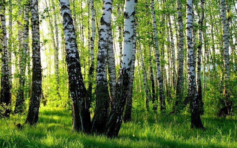 Ковры моей Родины природа, россия, фоторепортаж
