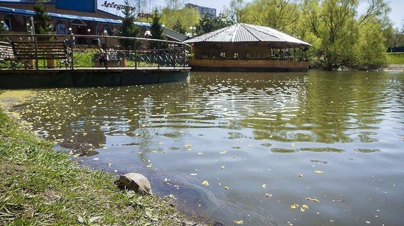 Европейские черепахи поселились в химкинском пруду