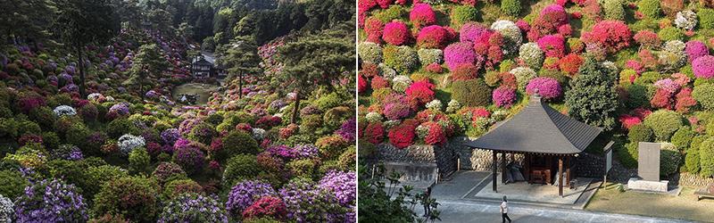 Shiofune-Kannon-ji Temple – буддийский храм, окруженный разноцветными кустами азалии