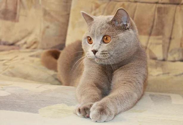 Кот-телепат