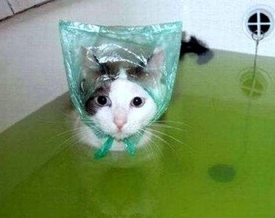 Если надеть на котэ пакетик, то мытьё пройдёт спокойно, так как он будет отвлечён на головной убор.