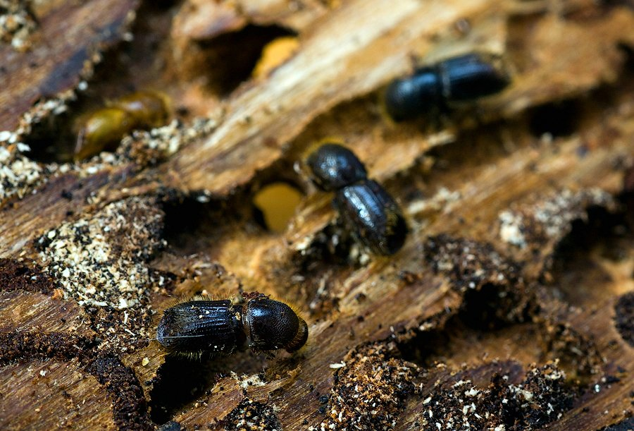 Несколько народных рецептов борьбы с насекомыми вредителями