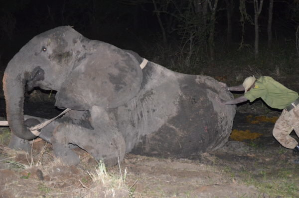 3-elephant-mother-and-her-grieving-children