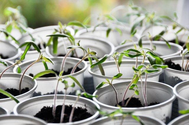 Регулятор роста растений
