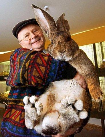 Кролик Переросток Скачать Игру - фото 2