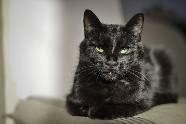 У моего соседа жил хитрый кот, который постоянно где-то пропадал…