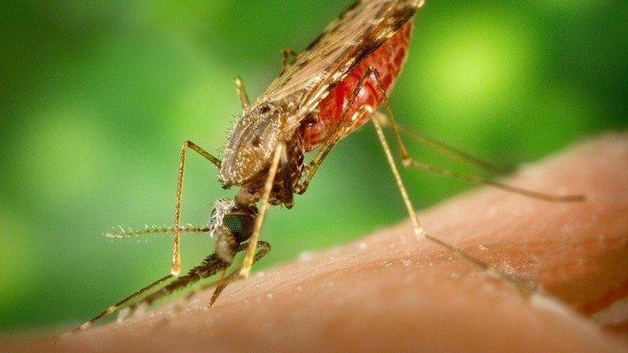 Биологи обнаружили «живое» вещество для отпугивания комаров