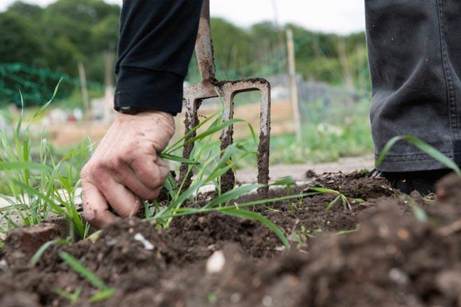 Избавление огорода и дачи от сорняков