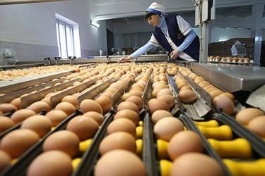 Уловки с датой выпуска, размером и мытьем при продаже яиц. Как не дать себя обмануть рис-5